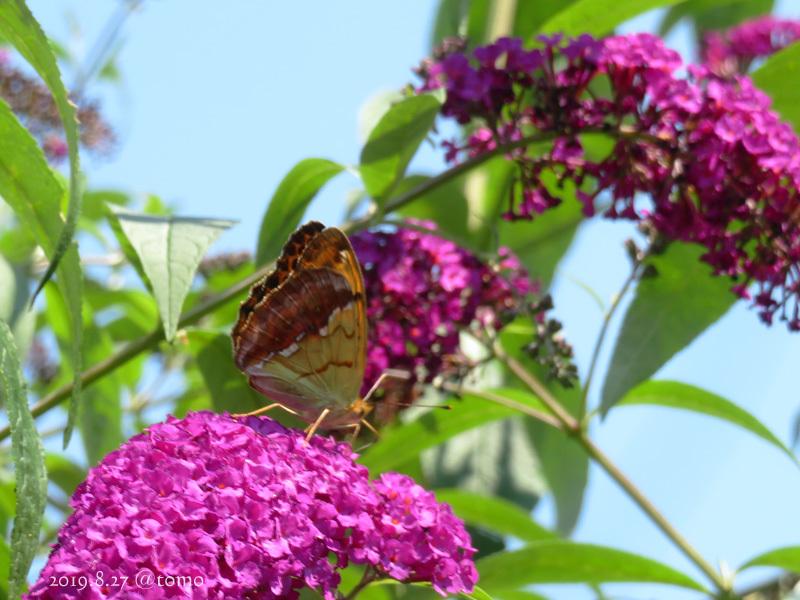 夏空に蝶々_f0067179_22060308.jpg