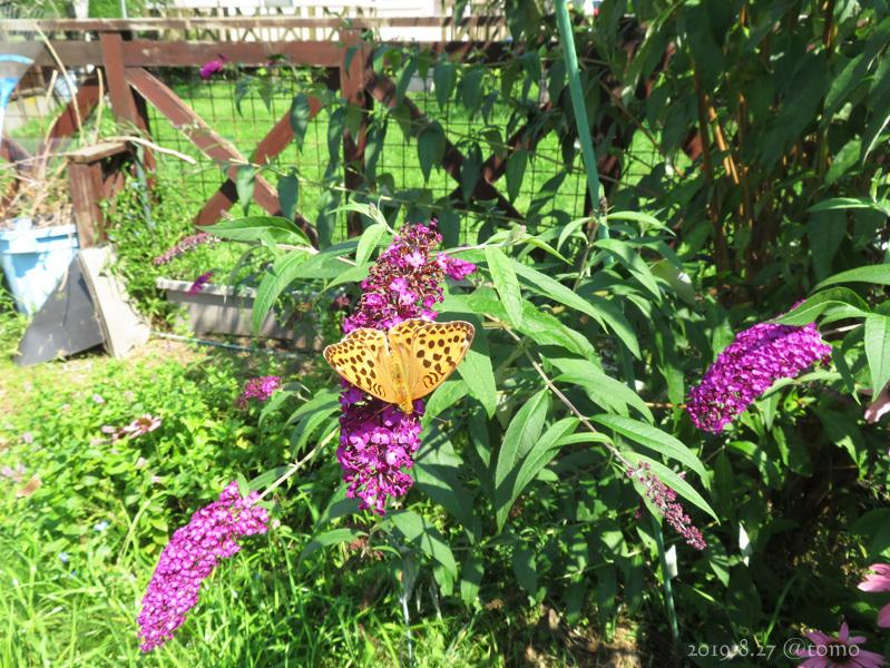 夏空に蝶々_f0067179_22061167.jpg