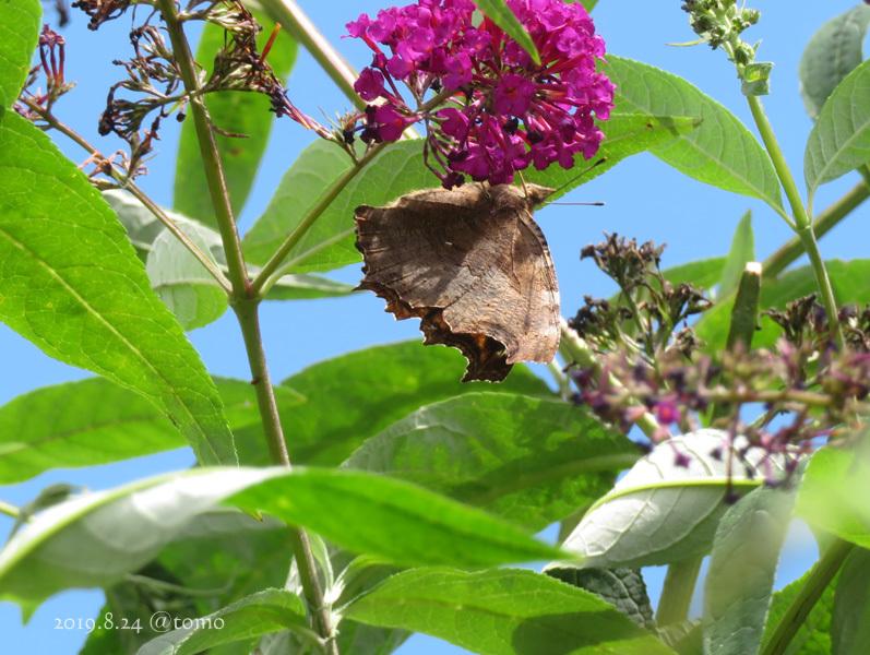 夏空に蝶々_f0067179_22063703.jpg