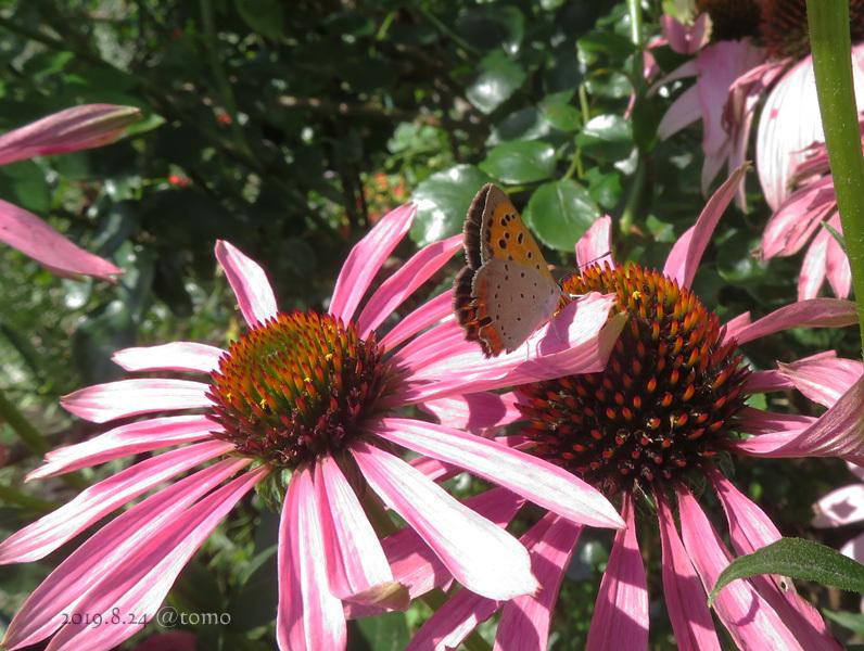 夏空に蝶々_f0067179_22070386.jpg