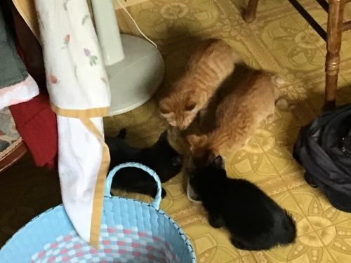アビーという野良猫 〜 4仔猫_c0027188_19293426.jpeg