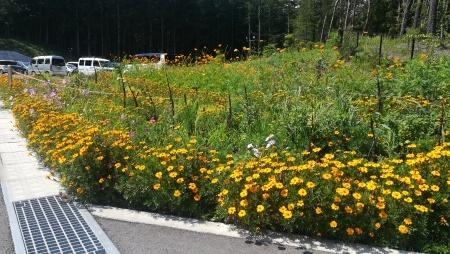 花々が満開を迎えています。_c0193896_19294147.jpg