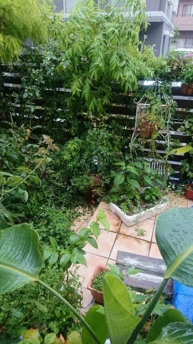 今日の庭_f0035506_22555910.jpg