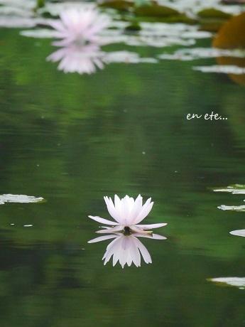 水面に咲く、水の精_c0098807_17213991.jpg