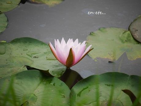 水面に咲く、水の精_c0098807_17214736.jpg