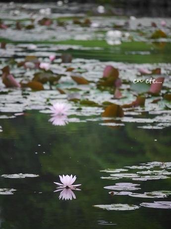 水面に咲く、水の精_c0098807_22121198.jpg