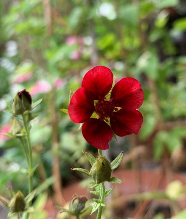 お庭では灼熱の夏をやり過ごした_c0301809_08041351.jpg