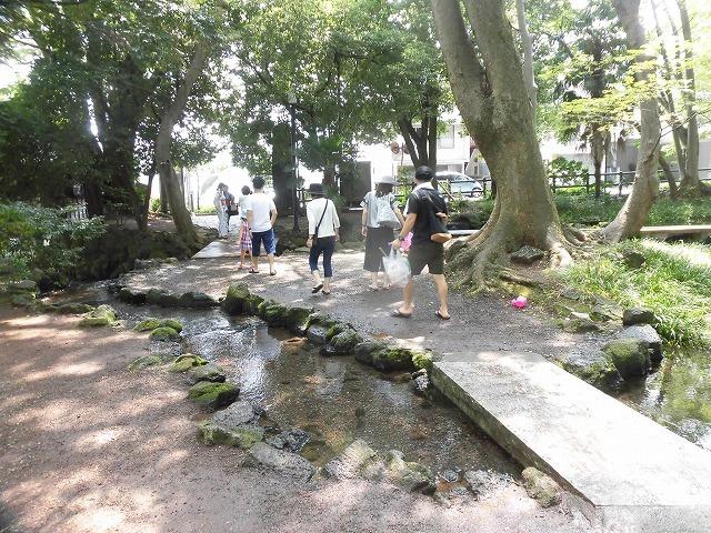 三島・桜川の川床(かわどこ) 田宿川でもやってみたい!_f0141310_07465723.jpg