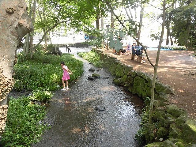 三島・桜川の川床(かわどこ) 田宿川でもやってみたい!_f0141310_07470417.jpg