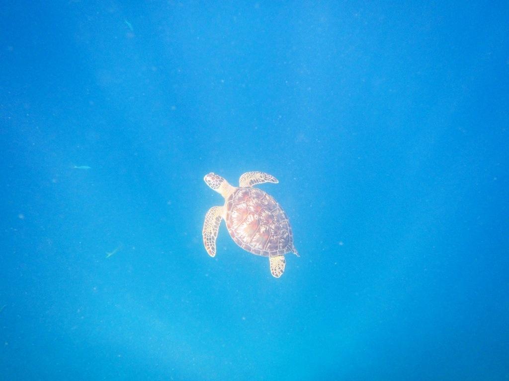 ウミガメに会えた夏休み☆_a0189838_17331205.jpg