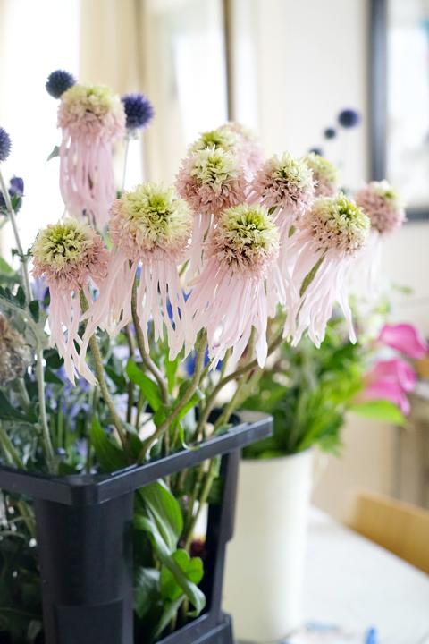 6月のレッスン 初夏の草花を使った投げ入れ3_f0127281_12165802.jpg