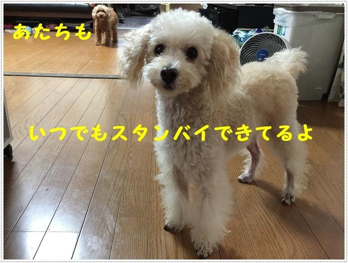 b0175688_20051561.jpg
