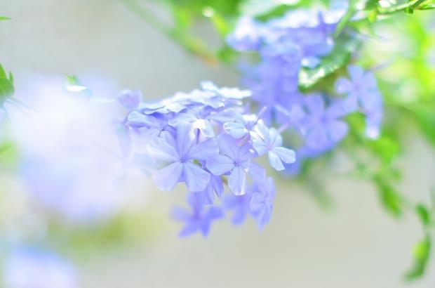 夏の庭 その2_d0025294_18080833.jpg
