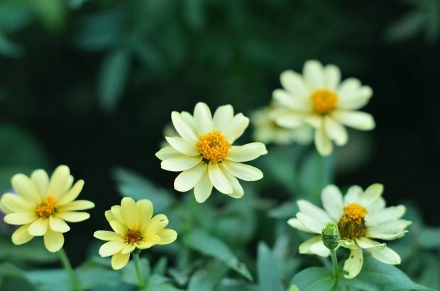 夏の庭 その2_d0025294_18092794.jpg