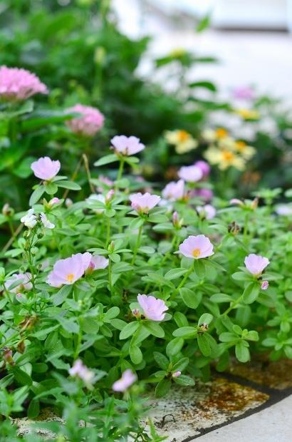 夏の庭 その2_d0025294_18094662.jpg
