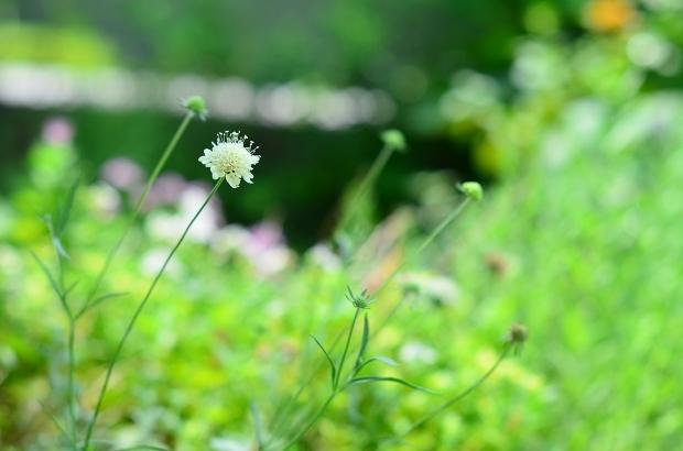 夏の庭 その2_d0025294_18101676.jpg