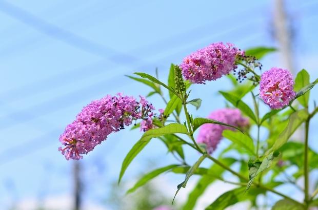 夏の庭 その2_d0025294_18105041.jpg