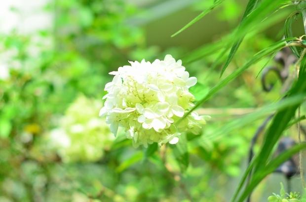 夏の庭 その2_d0025294_18111998.jpg