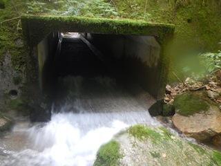 シャワー三昧の粥川は秋の気配_c0359615_21513855.jpg