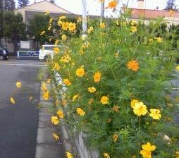 暑さがぶり返した東京でもやはり地元が・・_b0255217_16051257.jpg