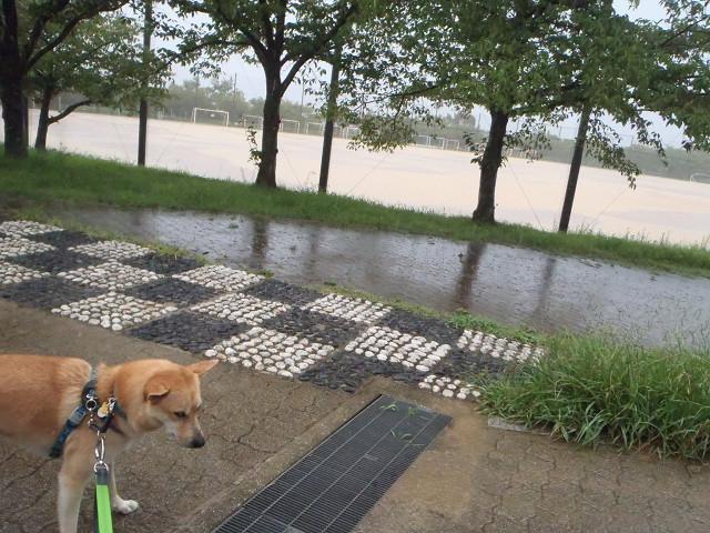 雨宿り_e0371017_23533627.jpg