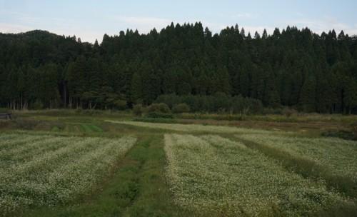 蕎麦畑はいぶし銀_f0055131_13113940.jpg