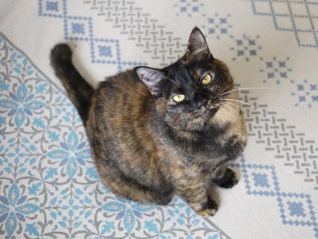 猫のお留守番 ぴーこちゃん編。_a0143140_23501000.jpg