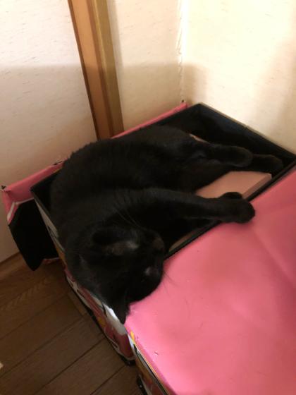 銀玉と黒猫_e0355177_18022140.jpg