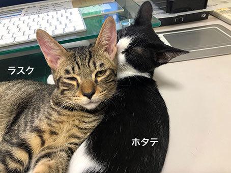 面会のお客様♬&茶太郎(元ちくわ)通信&_d0071596_00145299.jpg