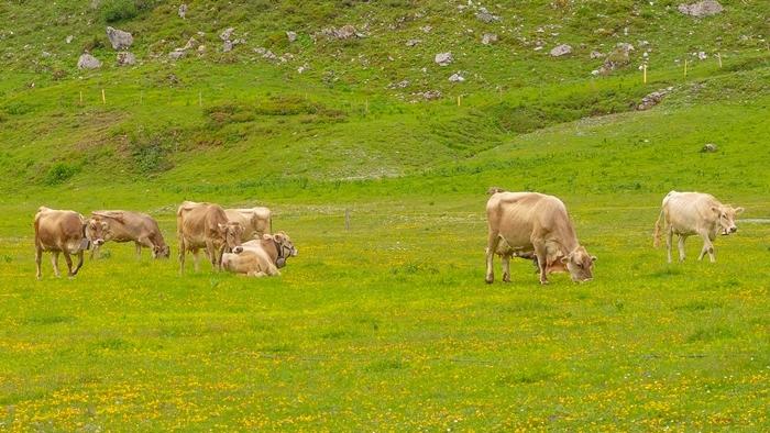 スイスの神秘的な美しい湖 トリュプゼー_b0145398_23533587.jpg