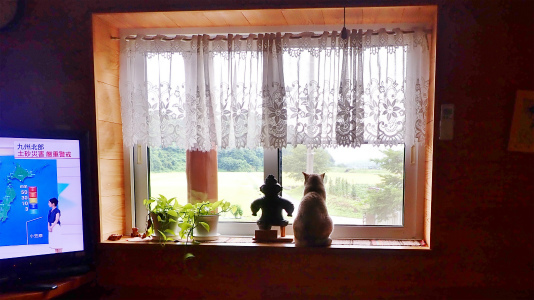 窓辺から何が見えますか?_c0336902_20092674.jpg
