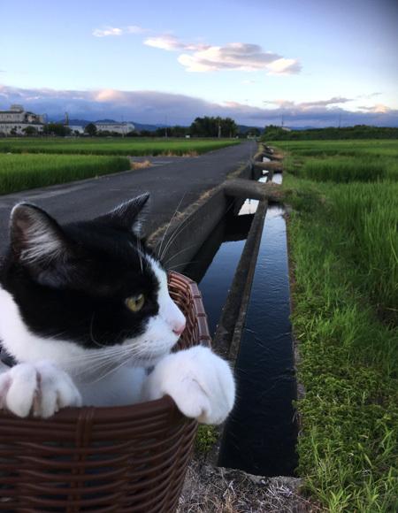 夏の終わりの田んぼ道_d0077603_10454261.jpg
