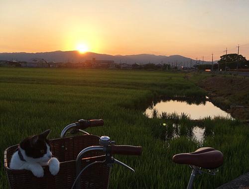 夏の終わりの田んぼ道_d0077603_10454907.jpg