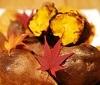 秋の味覚!食欲の秋を楽しもう!