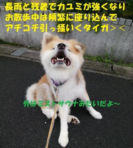 f0121712_14083854.jpg