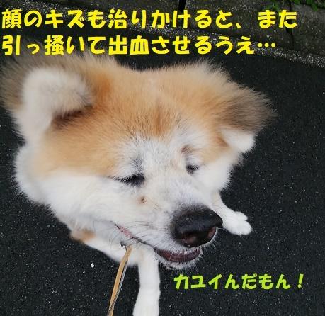 f0121712_14181041.jpg