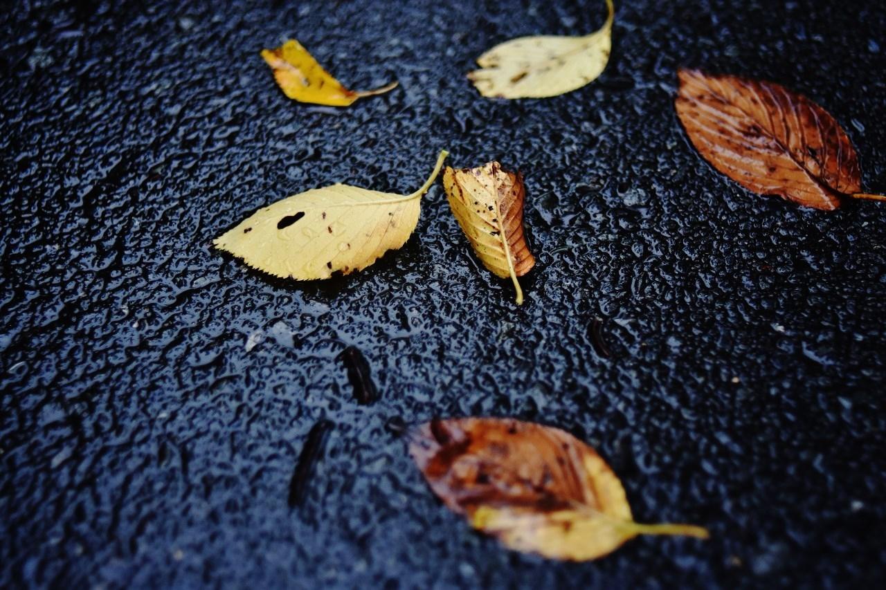 雨に歩けば・・・_d0065116_22012705.jpg