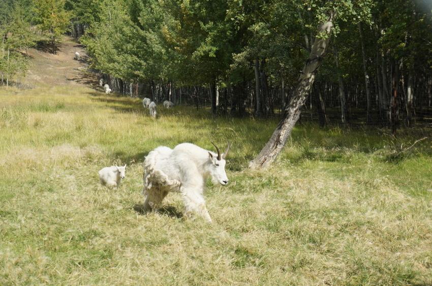 家族でユーコン旅。手付かずの大自然、野生動物とオーロラ_d0112928_12573157.jpg