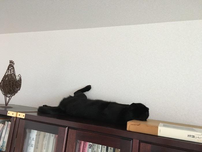 猫は寝起きに伸びをする_e0359436_11033830.jpg