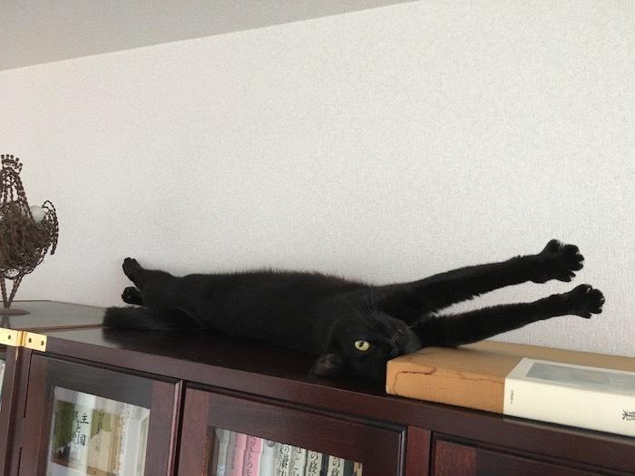 猫は寝起きに伸びをする_e0359436_11034596.jpg