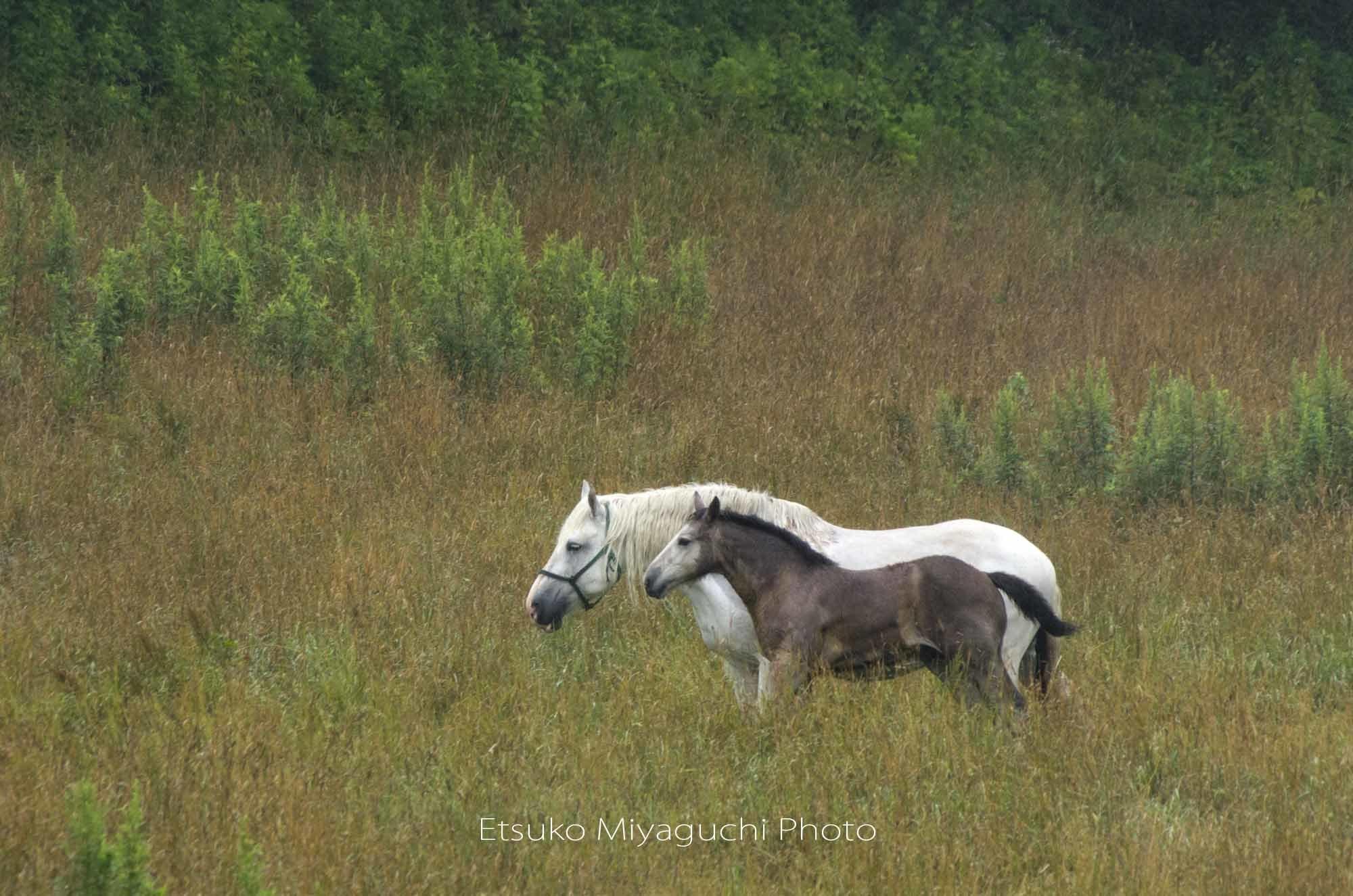 親子のお馬さん_f0152939_05240956.jpg