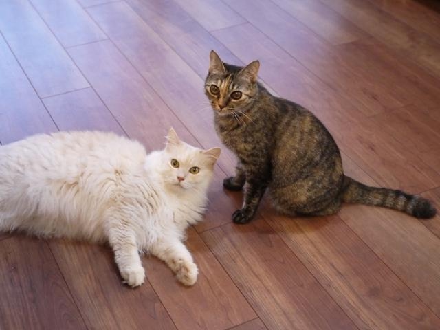 猫のお留守番 天ちゃん麦くん茶くん〇くんAoiちゃん編。_a0143140_21110205.jpg