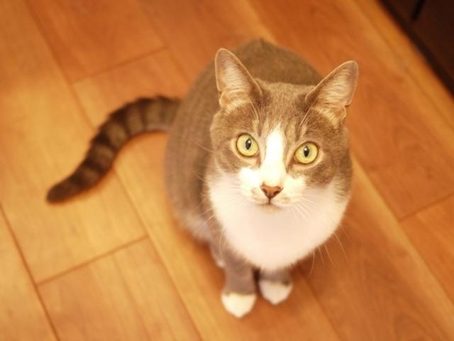 猫のお留守番 天ちゃん麦くん茶くん〇くんAoiちゃん編。_a0143140_21113480.jpg
