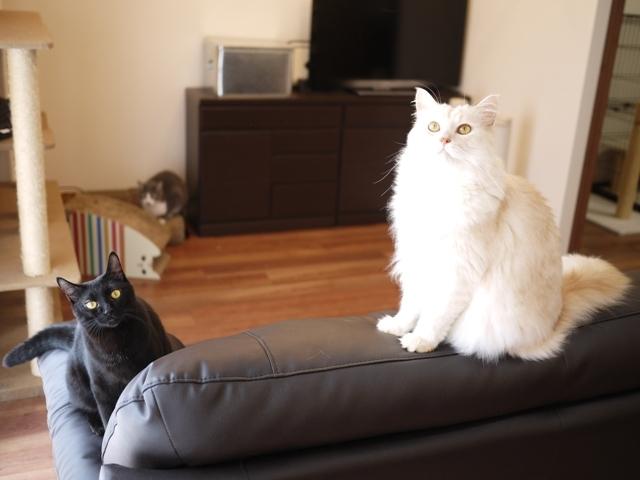 猫のお留守番 天ちゃん麦くん茶くん〇くんAoiちゃん編。_a0143140_21120679.jpg