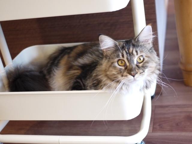 猫のお留守番 天ちゃん麦くん茶くん〇くんAoiちゃん編。_a0143140_21124057.jpg
