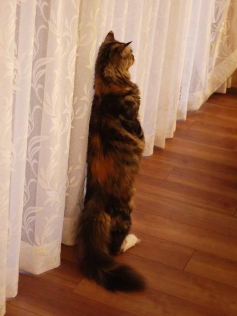 猫のお留守番 天ちゃん麦くん茶くん〇くんAoiちゃん編。_a0143140_21133506.jpg