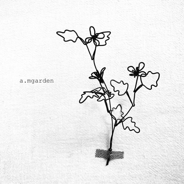 植物シリーズ纏め。_b0125443_15575484.jpeg