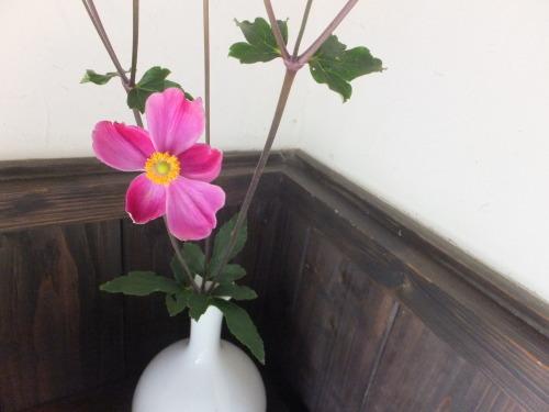 花を楽しむ器たち~6_d0336460_20431838.jpg