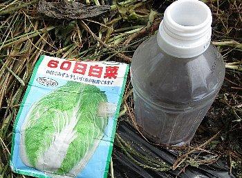 8月30日「白菜の種」_f0003283_16321776.jpg