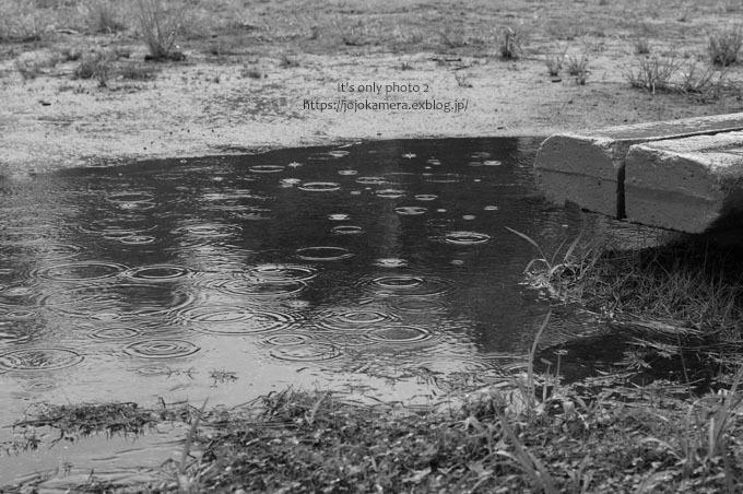 rainy day*Ⅰ_b0391986_19164083.jpg